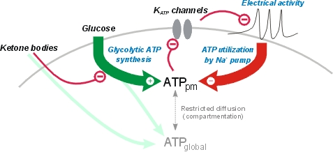 Neurobiochemical mechanisms of a ketogenic diet in refractory epilepsy